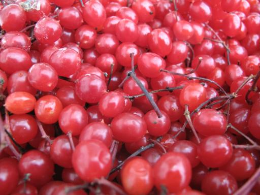 close up of red cranberries