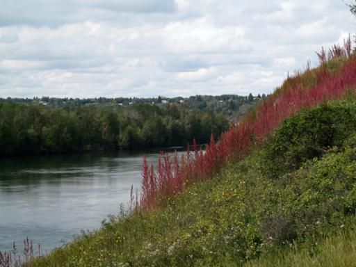 view of lake with green and red grasses