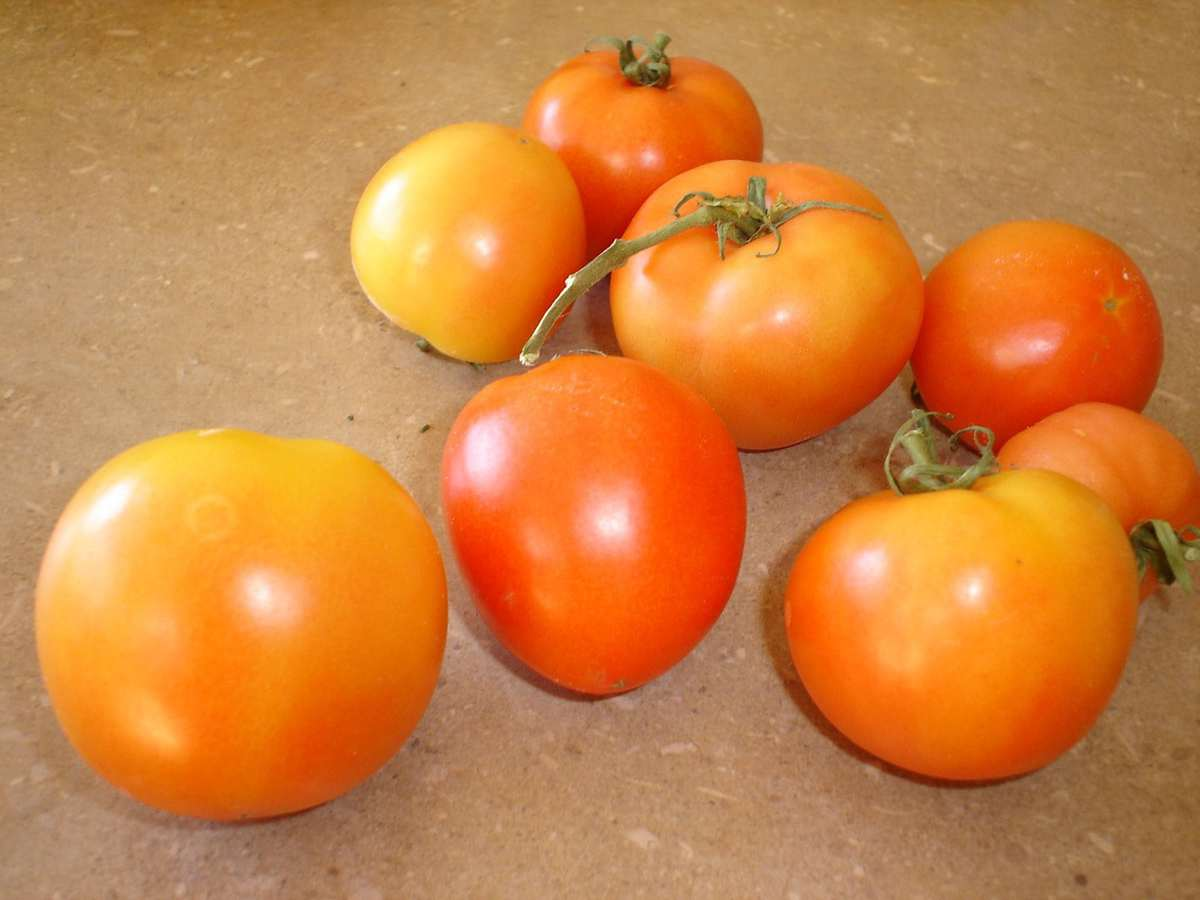 tomatoes 002
