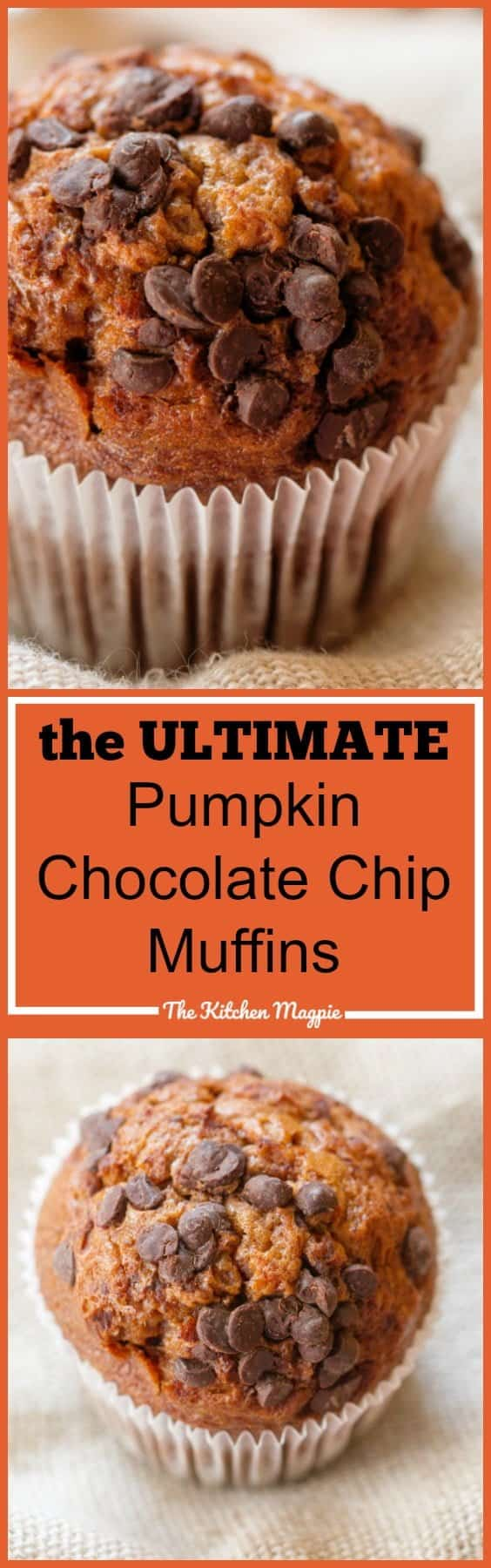 The Ultimate Chocolate Chip Pumpkin Muffins from @kitchenmagpie