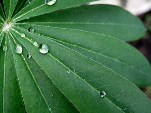 close up of green leaves with raindrops