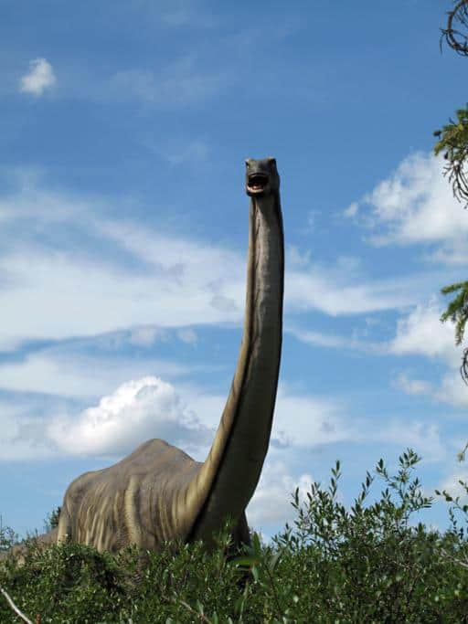 a real Apatosaurus inside Jurassic Forest