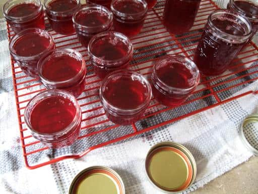 sterilized jars filled with cranberry jelly in red cooling rack