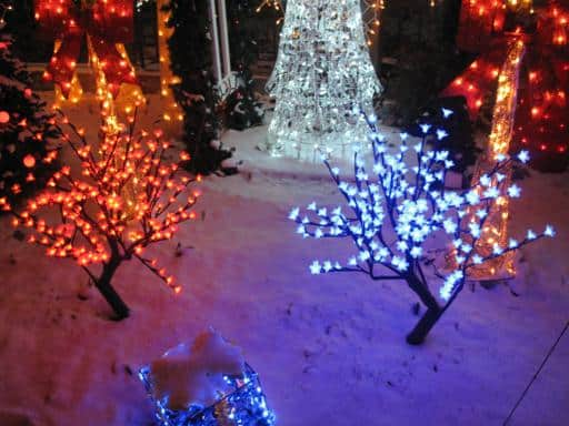 tree bushes with Christmas lights