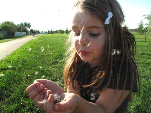 little girl blowing the dandelions from her hands