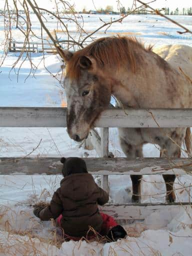 horse beyond the fence staring at the kid wearing brown coat