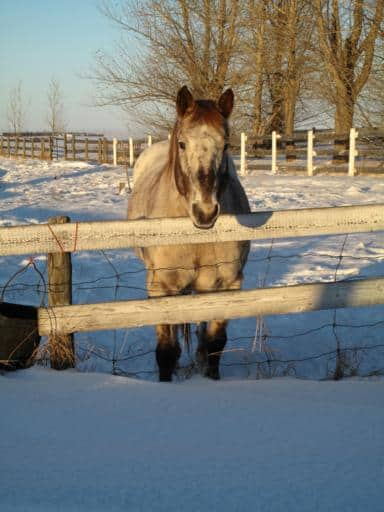 horse standing beyond the fence