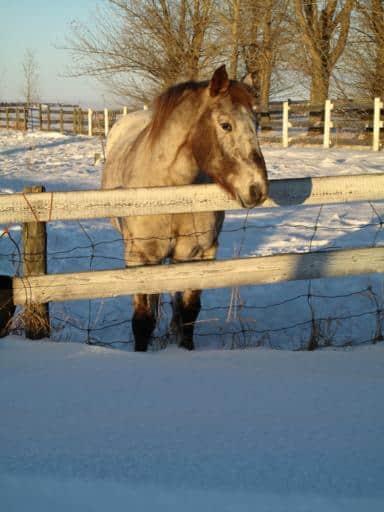 horse standing beyond the fence batting eyelashes
