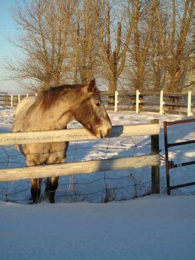 horse standing beyond the wood fence in a yard filled with snow