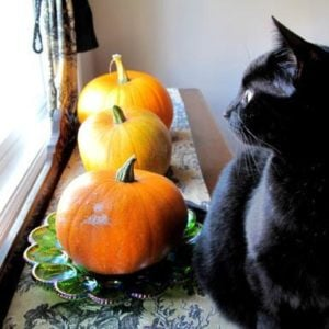 three large pumpkins and a fat black cat on top of table near the window