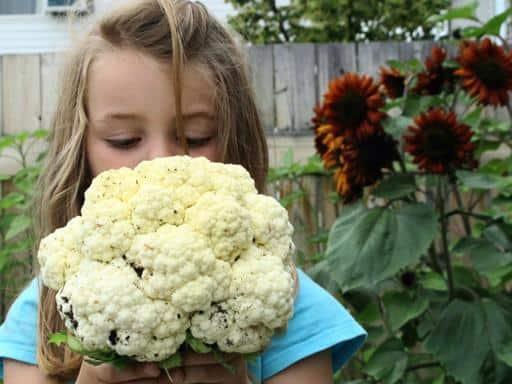 little girl holding a cauliflower