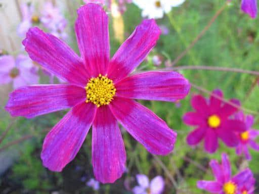Garden Snapshots