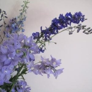 bouquet of beautiful delphiniums flowers