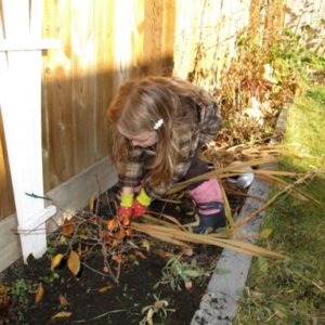 little girl pulling out all the dead gladiolas in the plant bed