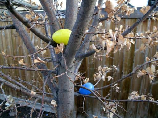 colorful eggs hidden in the trees for Easter Bunny