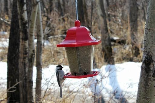 close up of a bird eating from bird feeder