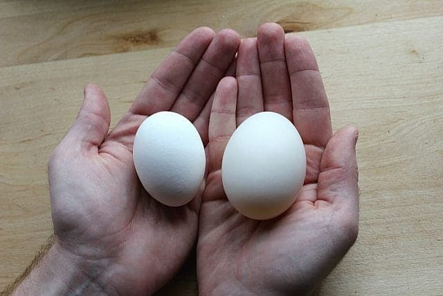 Duck Egg Compared to Chicken Egg Size