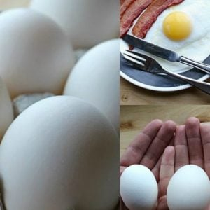 fresh and cooked duck eggs