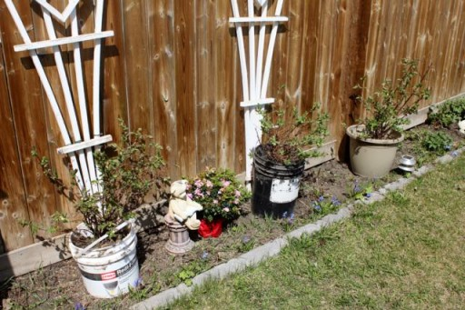 growing plants near the fence