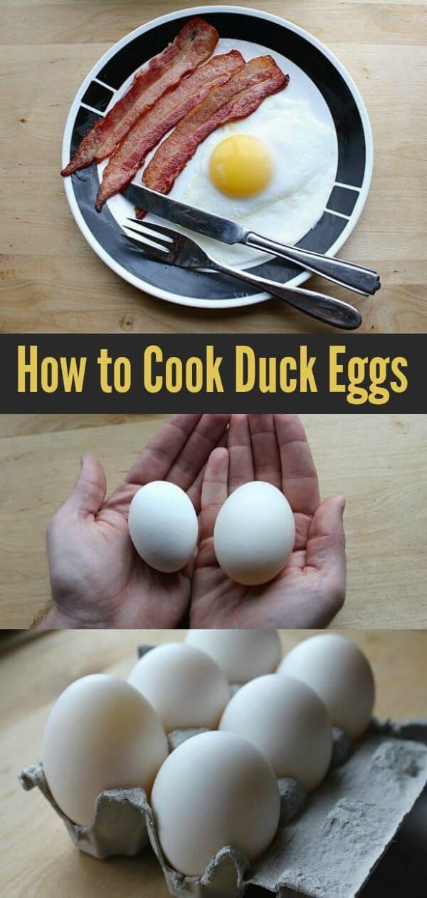How to cook duck eggs and all about these deliciously large eggs! #ducks #eggs #cooking #breakfast #homesteading #duckeggs