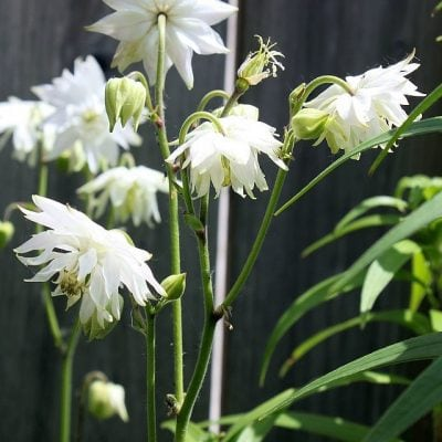 Magpie, Magpie, How Does Your Garden Grow?
