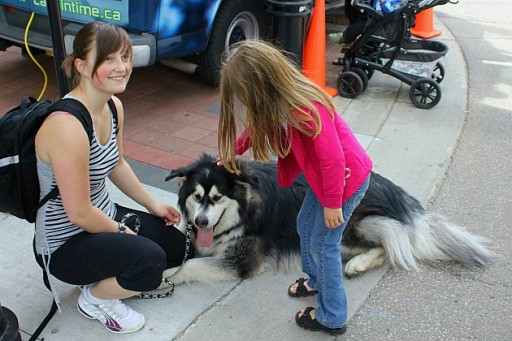 little girl touching the big dog
