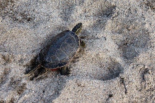 close up of a turtle in a sand