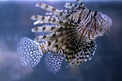 black and white color fish