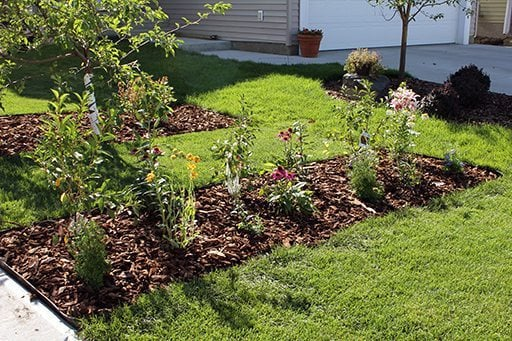 look of the yard with green grass and growing flowering plants