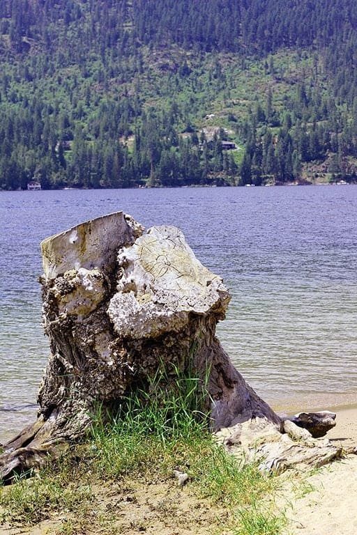 beautiful view of the lake with an old log of tree