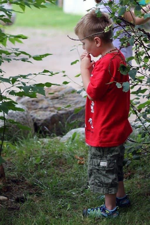 a kid eating saskatoon berries
