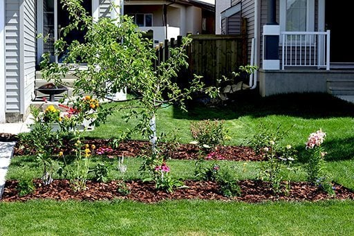 the after look of planting yard when plants started growing