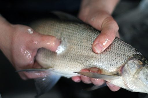 How to Clean White Fish