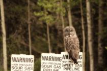 owlsmall