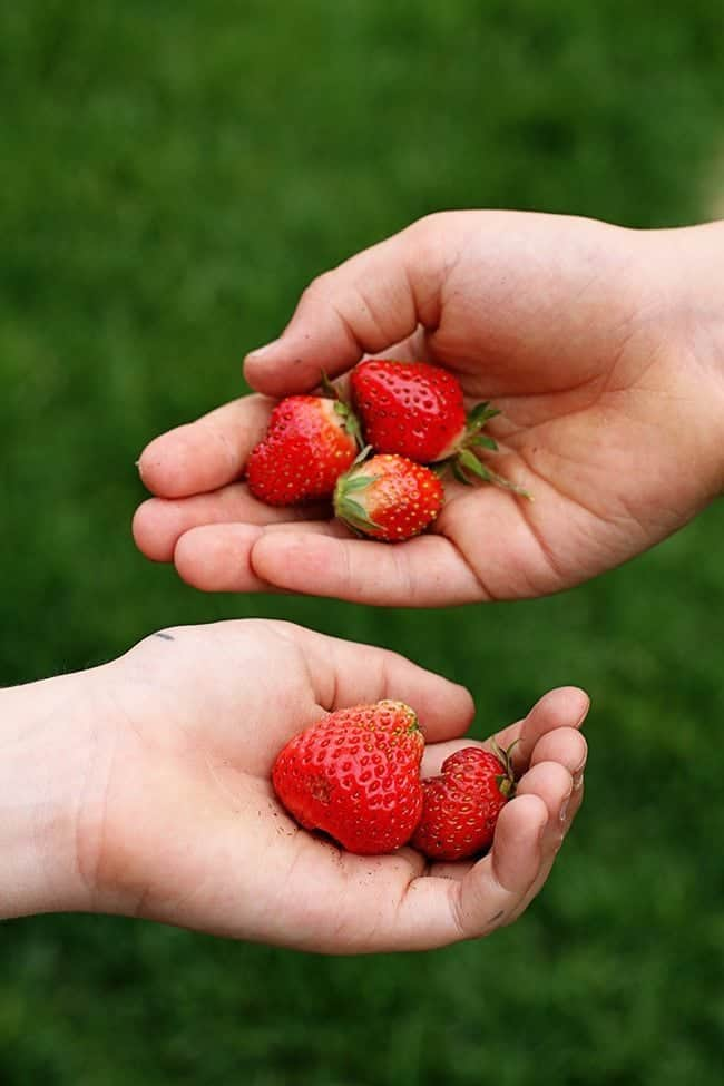 fresh pieces of strawberries on hands