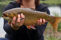 brooktrout