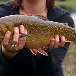 close up of spotted brook trout