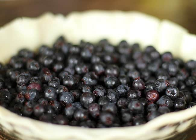 lots of fresh Saskatoon berries in a pie dough