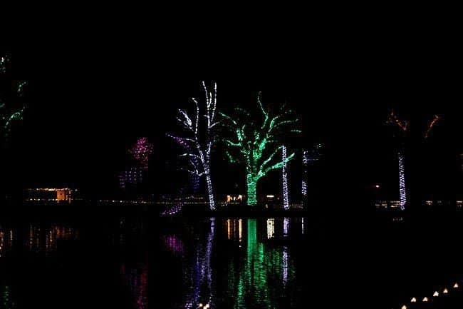 trees with bright color lights