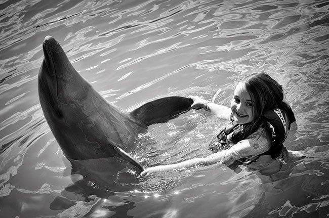 dolphinBW