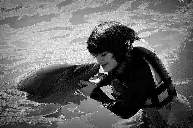 dolphinbw1