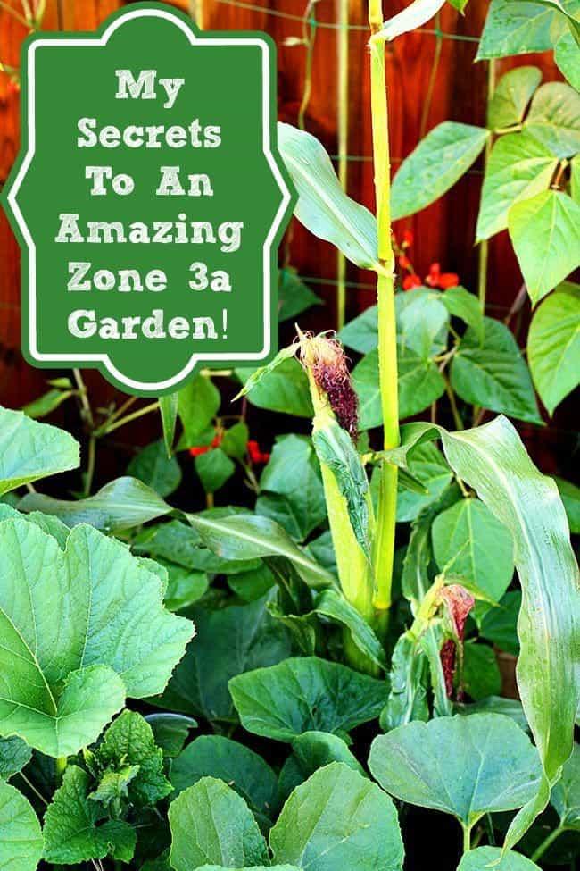 My Secrets To Growing An Amazing Zone 3a Garden!