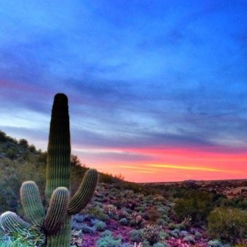 Settling Into Arizona