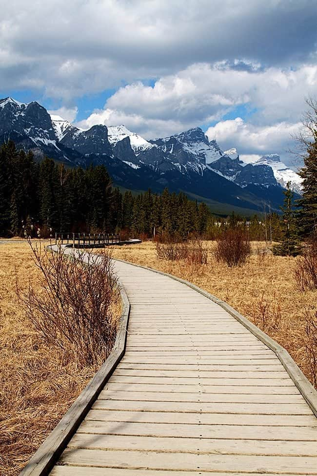 Boardwalk with a view of high trees and mountain with snow