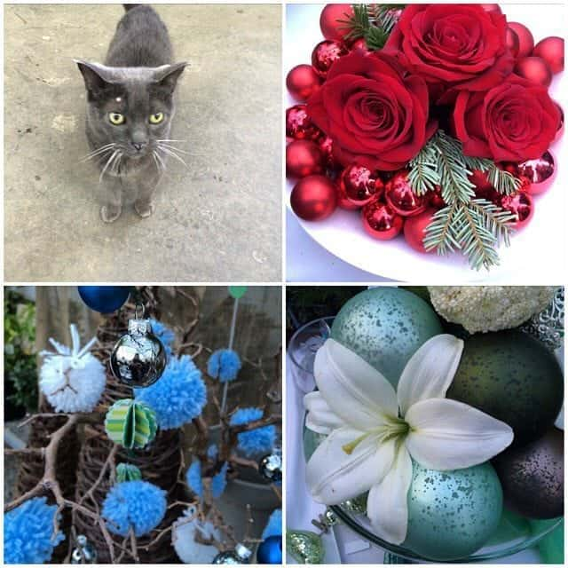collage of photos with grey cat, red and blue Christmas ornaments