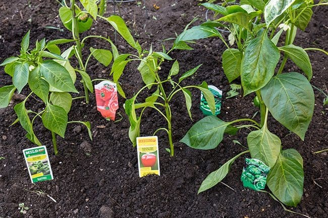 Lowes-Pepper-Patch