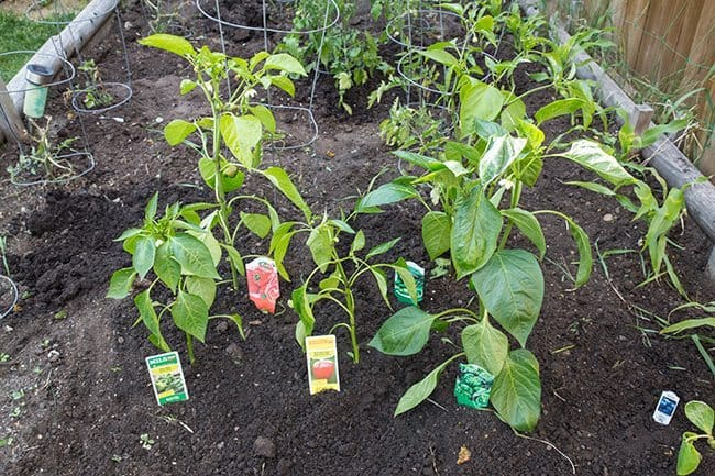 Lowes-Pepper-Patch1