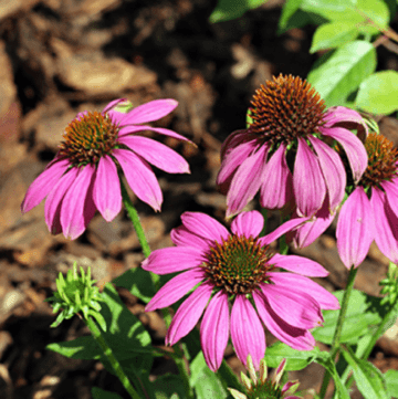 Plant Your Free Buzzing Garden this Spring!