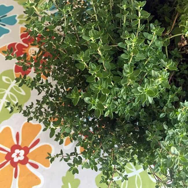 herb-bowl4