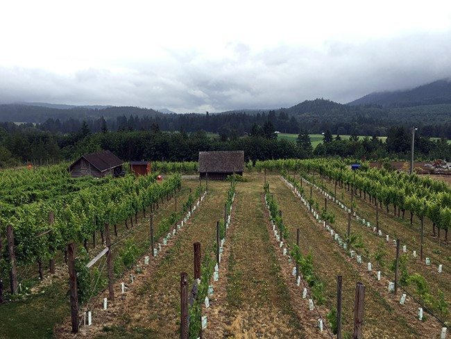 wineries in the Cowichan area